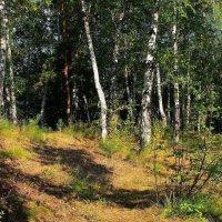 В тени деревьев лето притаилось... :: Галина Стрельченя