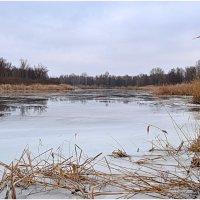 Зимняя оттепель :: Svetlana Kravchenko