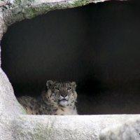 взгляд хищника :: Олег Лукьянов