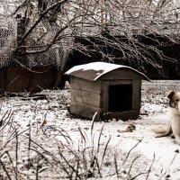 первый снег) :: Юлия Малиночка