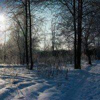 Зимний лес :: Диана Попова