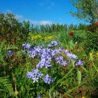 Многоцветье :: Grey Bishop