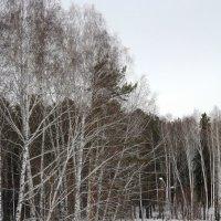 Зимние мотивы :: Наталья Золотых-Сибирская