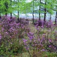 Байкальская весна :: Ольга