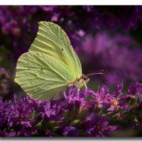 Бабочка 2 :: GaL-Lina .
