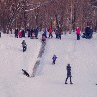 Прогулка в парке. :: Сергей Исаенко