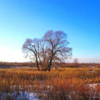 В солнечный зимний день :: Андрей Снегерёв