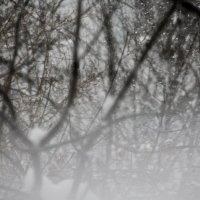 Снегопад.... :: Валерия  Полещикова