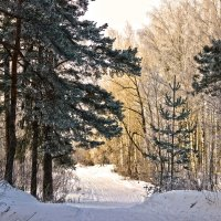 зима :: Краснов  Ю Ф