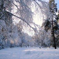 зимний лес манит гулять... :: Галина Филоросс