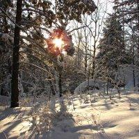 Зимний лес :: Оксана Яремчук