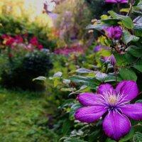 Прогулка по саду :: Svetlana27