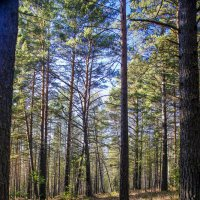 Осенний лес :: Олег Мартоник