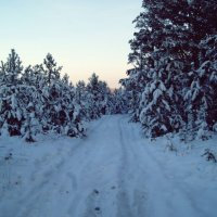 Зима в Сибири) :: Юлия Березкова