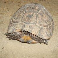 черепаха :: youry
