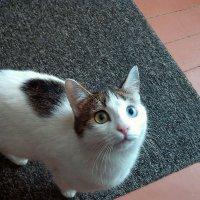 Кошка :: Александр Малышев