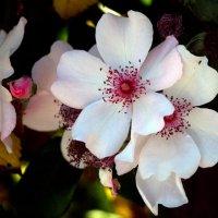 Цветы :: Алина