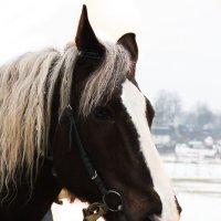 Лошадь :: Кристина Капич