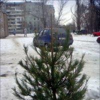 А выбросить жалко... :: Нина Корешкова