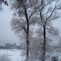 Зимняя графика :: Елена Семигина
