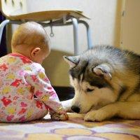 Доча отбирает косточку у нашей собаки) :: Дмитрий Дурнев