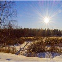 Рождественское солнце :: Андрей Дворников