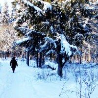 Зимний день :: Талик К