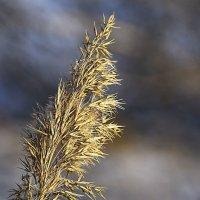 В зимнем поле :: юрий Амосов