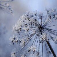 Зима-а-а ... :: Алексей Окунеев