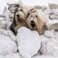 девочки в ледяной крепости :: Лариса Батурова