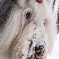 портретик вредной Лизы :: Лариса Батурова