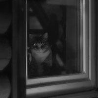 Про кота :: Ирина Елагина