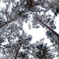 Зима :: Lena Li