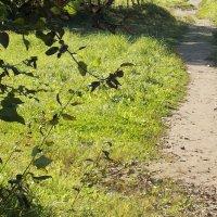 Дорожка в траве :: Фотогруппа Весна.