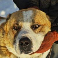 Маленький пёс :: Дмитрий Конев