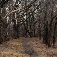 Там, на невиданных дорожках... :: Николай Дони