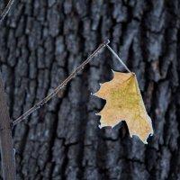 До свидания осень.. :: Андрей Нибылица
