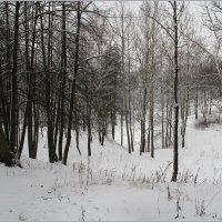 Снежок присыпал все стежки-дорожки. :: Роланд Дубровский