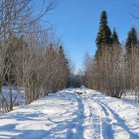 В поисках зимы 2 :: Нина Сигаева