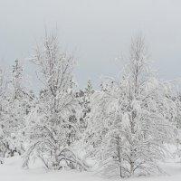 В зимнем лесу. :: Галина Полина