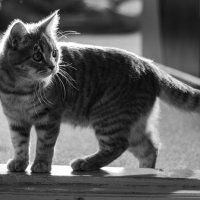 кошка :: Дмитрий