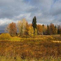 Осенний перелесок :: Валентин Котляров