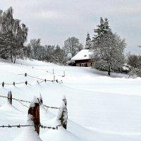 В снежном плену :: Alexander Andronik