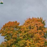 Осень в Смоленске :: Алексей Шаповалов Стерх