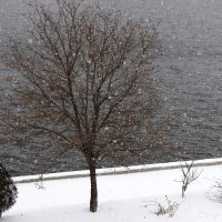 Снегопад :: Эльдар Абасов