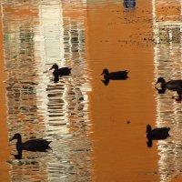 Img_5876 - Утки плавают :: Андрей Лукьянов