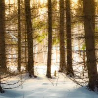 Сказочный лес :: Юрий Морозов