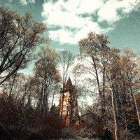 Странный лес :: Ольга Ваайнэ