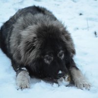 Первый снег :: Сергей Щербаков