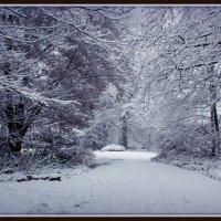 Вот и зима пришла :: Alexander